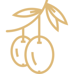 Variedad Aceituna Picual